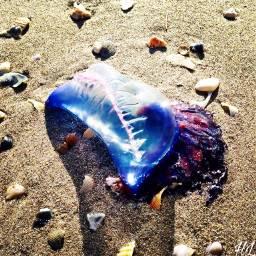freetoedit nature sea ocean sand