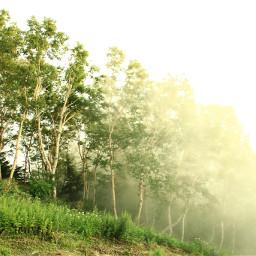 freetoedit nature japan foggy trees