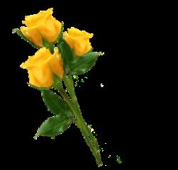 flower flowers yellow yellowflowers gifs freetoedit