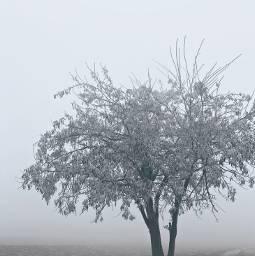 freetoedit tree winter fog snowflakes