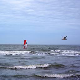 winterocean windsurfing seagull freetoedit