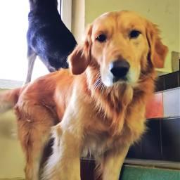 doglife dog retriever husky dayinthelife