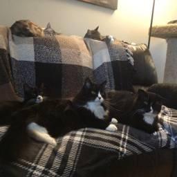 cats kitty cat tuxi theboys