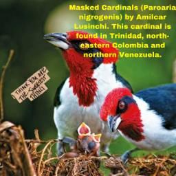 freetoedit birds babies nest petsandanimals