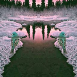 freetoedit bird mirroreffect holgaeffect trees