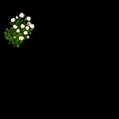 square flowers shadow freetoedit