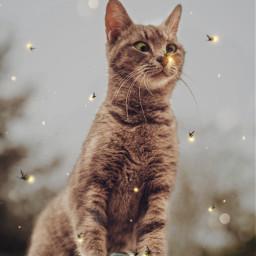 freetoedit cat firefly magicbrush stickers