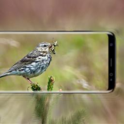 freetoedit smartphone bird insect smartphonephotography
