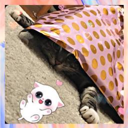 freetoedit cat playtime