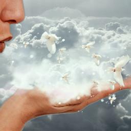 freetoedit clouds birds retroeffect madewithpicsart