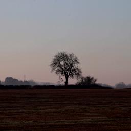 freetoedit landscape lonelytree tree morningsky