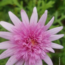 myshots pinkthings flowersshots