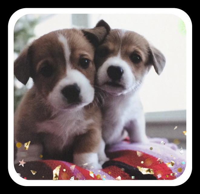 #cute
