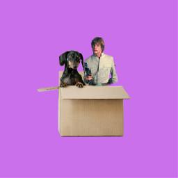 freetoedit lukeskywalker starwars box dog