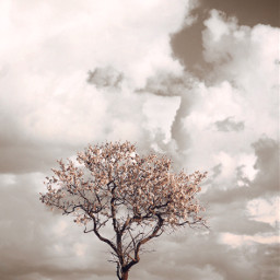 nature tree flowerytree skyandcloudsbackground lowangleshot freetoedit