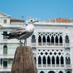 bird venice