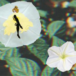dancer flower white blossom