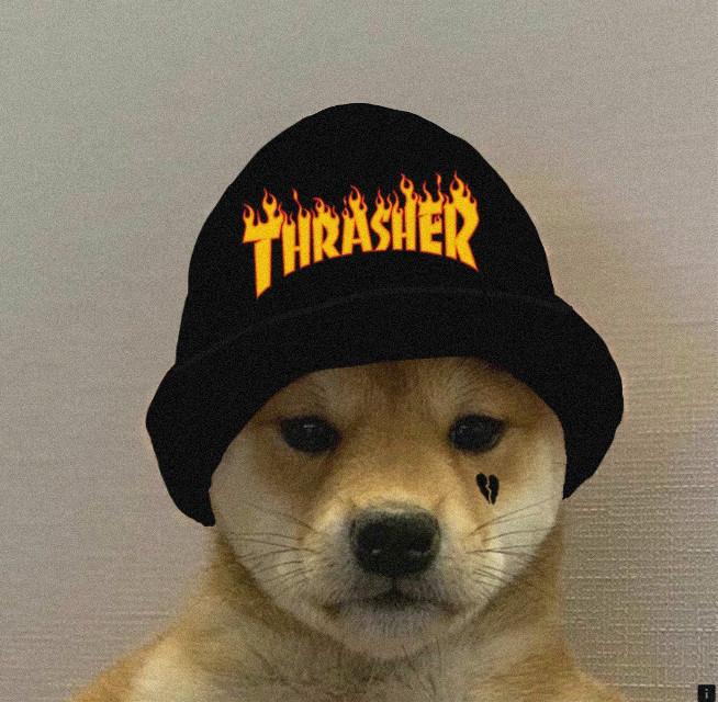#freetoedit  #trasher #dog