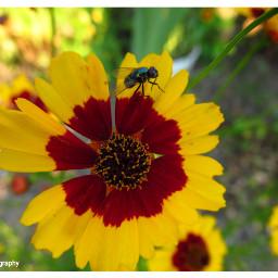 freetoedit followme followmeplease flowers flowerpower