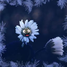 daisy flower frostymorning frozen stickers freetoedit