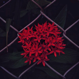 wirenetting urban bushes shrubs flowers freetoedit