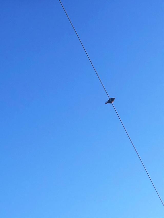 #freetoedit #bird #wire #sky #clearsky #minimal