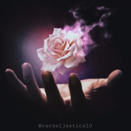 freetoedit picsart rose flower magical ircuniverseinyourhand universeinyourhand