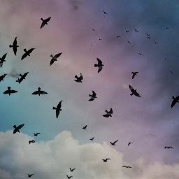 freetoedit vögel srcbirds birds