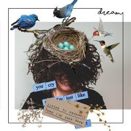 freetoedit remix like likeme birds