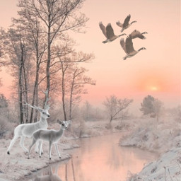 sunset river winter snow deer freetoedit