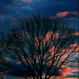 tree sunsetperfection sunset