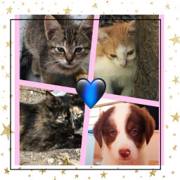 mypets💖 freetoedit mypets
