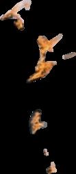 flame pinkfloyd freetoedit