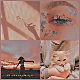 freetoedit soft softaesthetic cat sunset