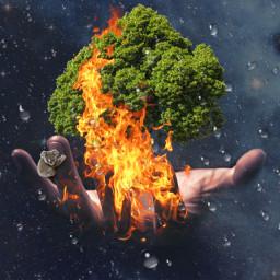 freetoedit savenature australia ircuniverseinyourhand universeinyourhand