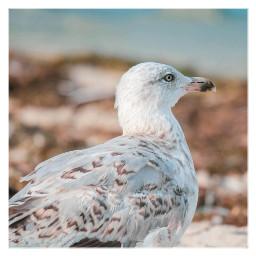 seagull bird balticsea summervibes vacation freetoedit
