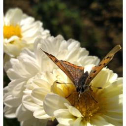 freetoedit followme followmeplease butterfly butterflies