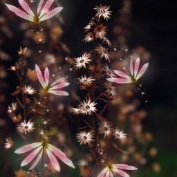 freetoedit picsart colorful flowers nature
