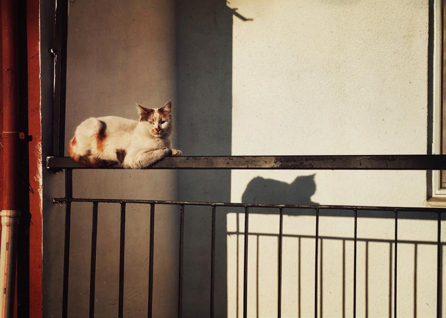 #cat #stray #shadow #sunlight