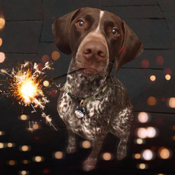 freetoedit dog pet sparkler night