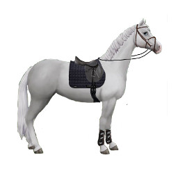 horse sso starstableonline blackoutfit freetoedit