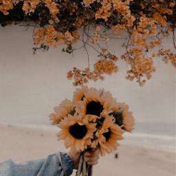 yellow yellowtumblr sunflowers🌻💛🌻 sunflower🌻 beautiful