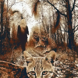 vipshoutout cat petsandanimals woman woods freetoedit