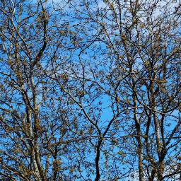 freetoedit tree branch background blue