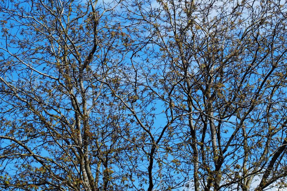 #freetoedit #tree #branch #background #blue #sky #myphoto