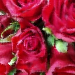 red roses rosesarered redroses flowers freetoedit