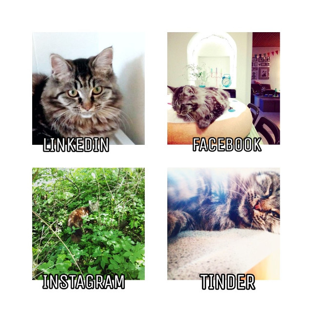 #freetoedit #pet #cat #socialnetwork