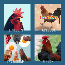 freetoedit animal socialnetwork pet rcsocialpetworks socialpetworks