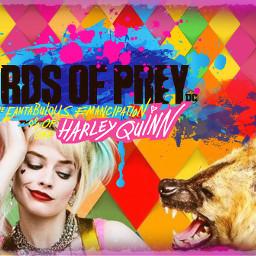 freetoedit harleyquinn hyena ecbirdsofpreywhatwouldharleydo birdsofpreywhatwouldharleydo #WhatWouldHarleyDo #birdsofprey #HarleyQuinn #WarnerBros #MargotRobbie #BOP