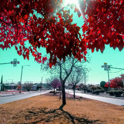 freetoedit wintertime autumnleaves midday sunny